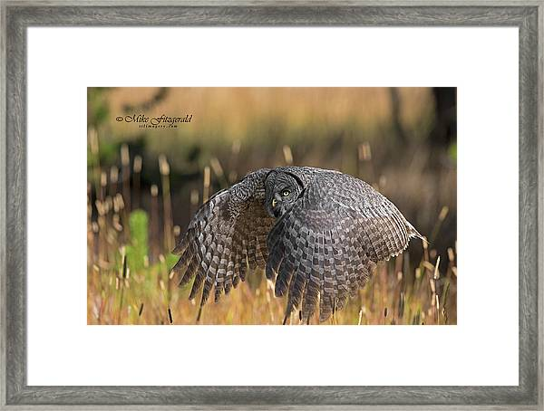 Low And Dangerous Framed Print
