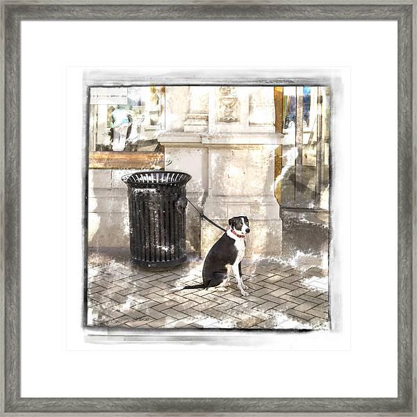 Loyal Dog Framed Print