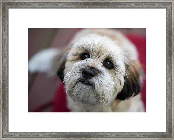 Lucy 2 Framed Print