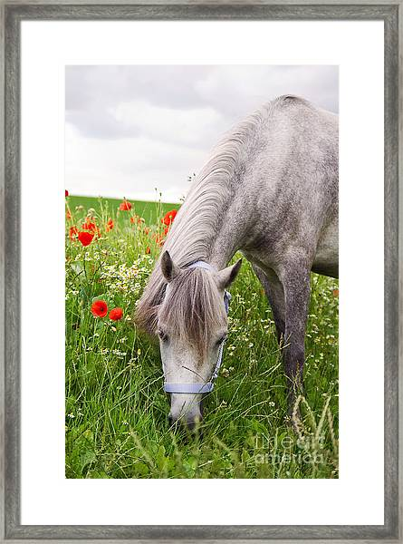 Lulu And The Poppies  Framed Print