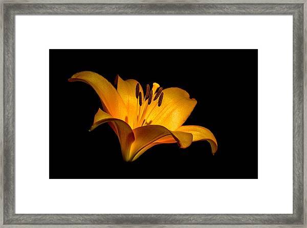 Luminous Lilly Framed Print