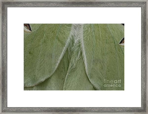 Luna Framed Print
