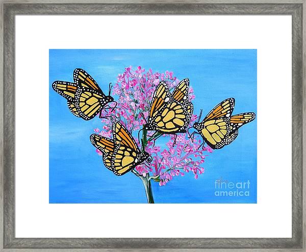 Butterfly Feeding Frenzy Framed Print