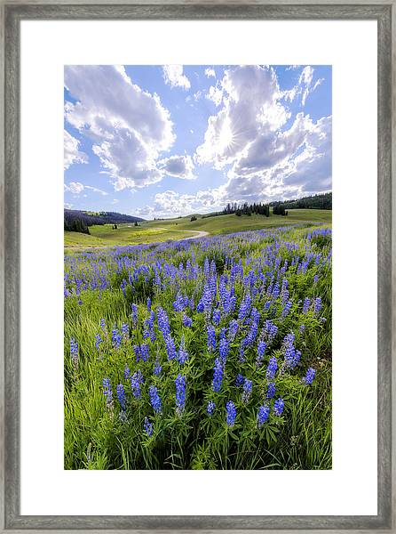 Lupine Pass Framed Print