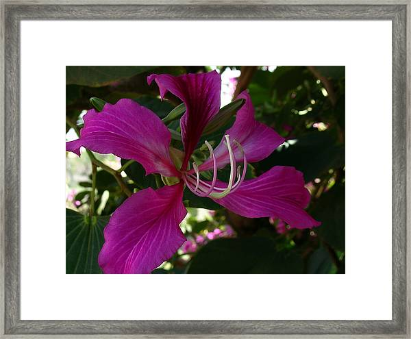 Lure Of The Tropics Framed Print by James Temple