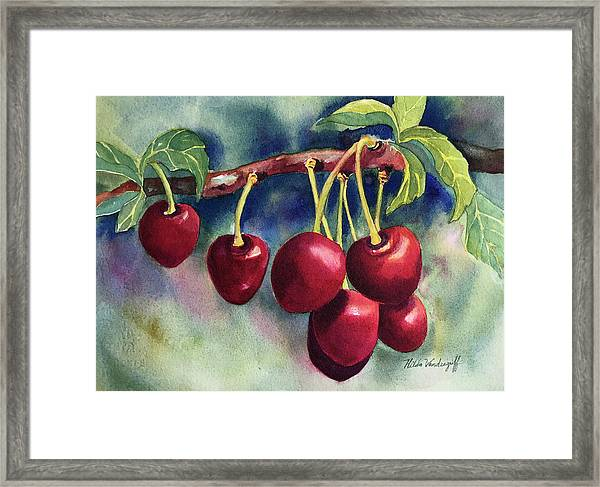 Luscious Cherries Framed Print