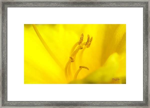 Luscious Yellow Framed Print
