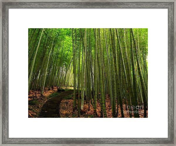 Lush Bamboo Forest Framed Print
