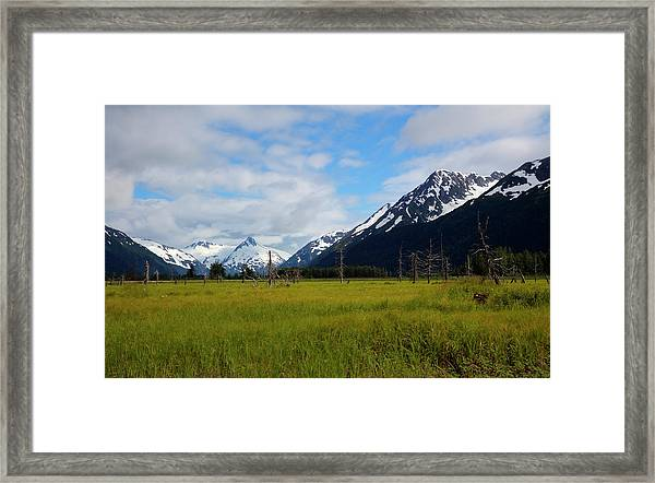 Lush Meadow In Alaska Framed Print