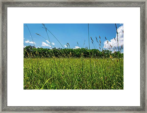 Lying In The Grass Framed Print