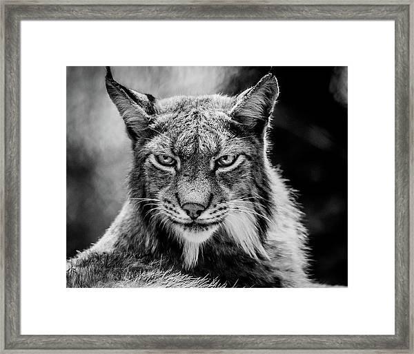 Lynx Portet Framed Print