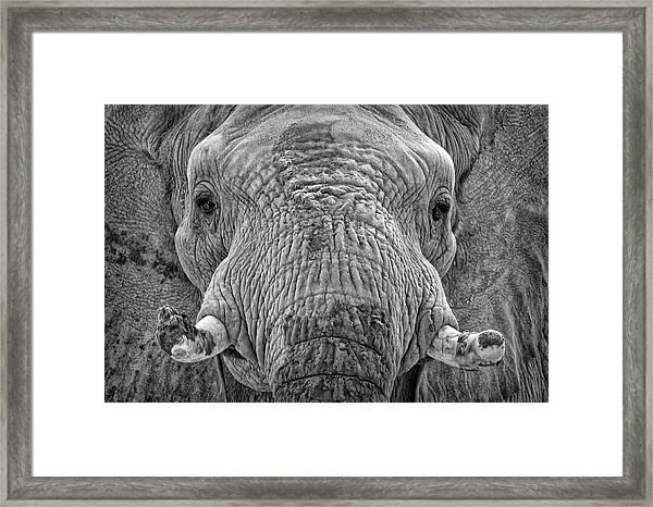 Mabu Up Close N Personal Framed Print