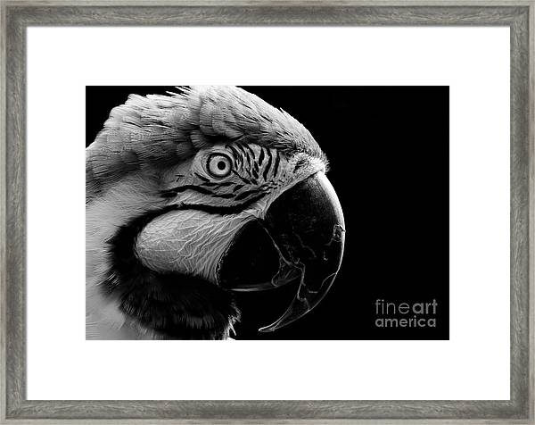 Macaw Parrot Portrait Black And White Framed Print