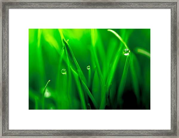 Macro Image Of Fresh Green Grass Framed Print