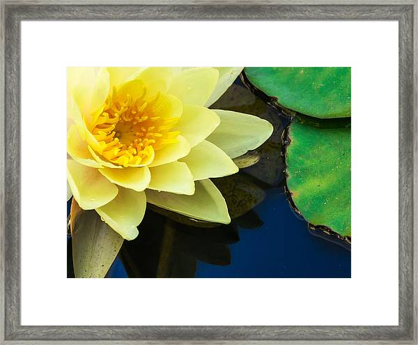 Macro Image Of Yellow Water Lilly Framed Print