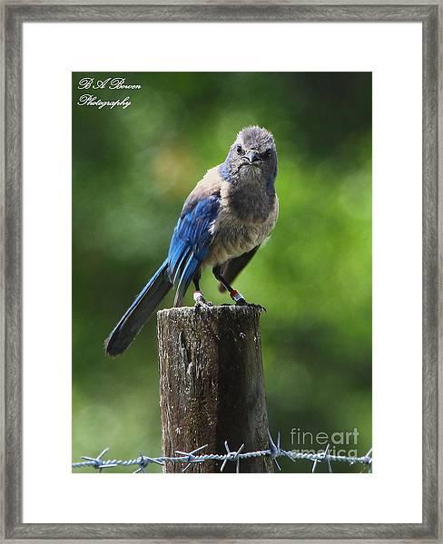 Mad Bird Framed Print
