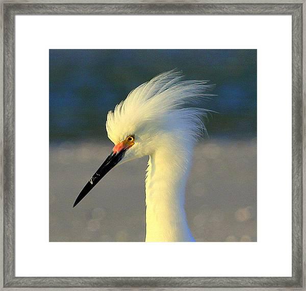 Mad Egret Framed Print