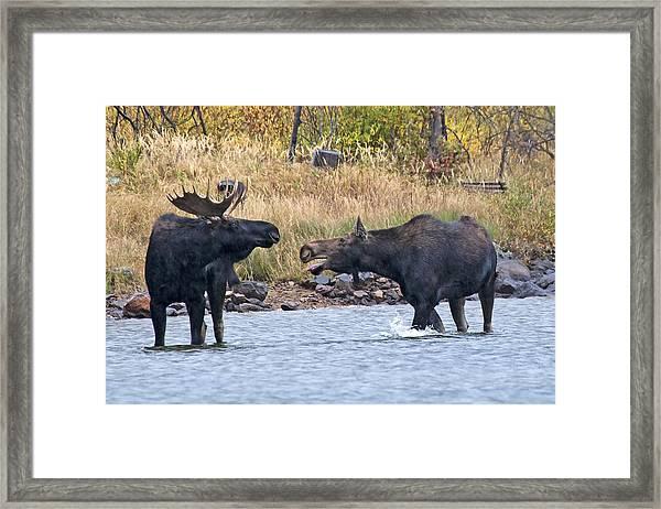 Mad Mamma Moose Framed Print
