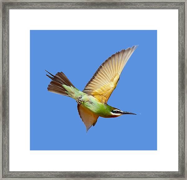 Madagascar Bee-eater T-shirt Framed Print