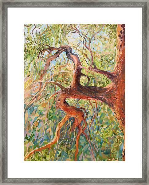 Madrona I Framed Print