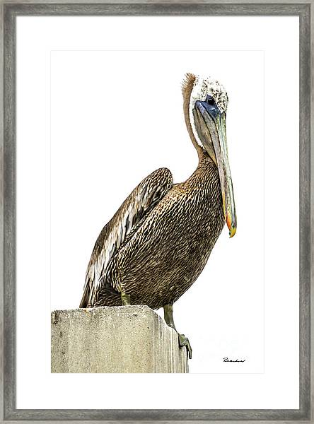Majestic Gulf Shores Pelican 1071a Framed Print