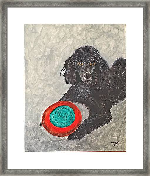 Maggie And Her Frisbee Framed Print