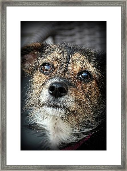 Maggie Framed Print