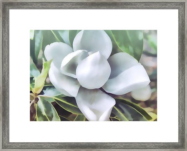 Magnolia Opening 2 Framed Print