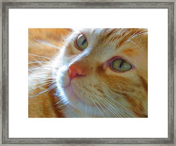Magic 2 Framed Print