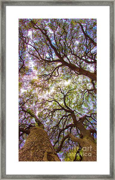 Magic Canopy Framed Print