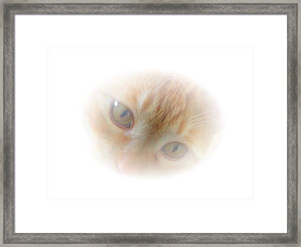 Magic Eyes Framed Print