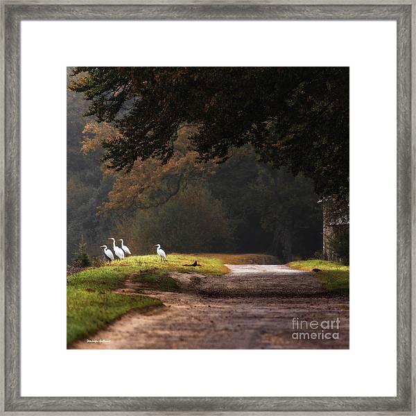 Magic Morning Framed Print