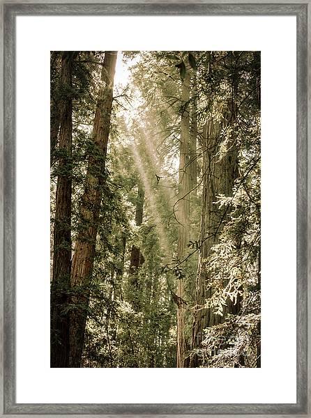Magical Forest 2 Framed Print