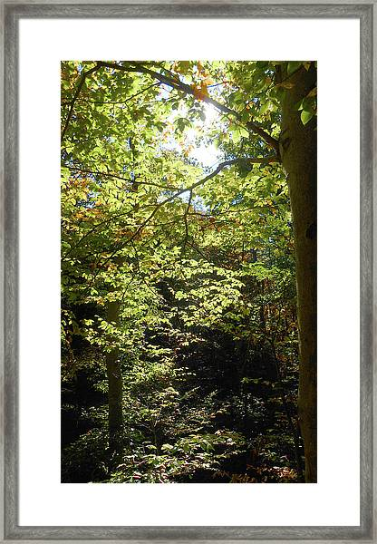 Magical Forest Beginning Of Fall Framed Print