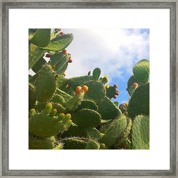 Magnificent #cactus With New Buds And Framed Print