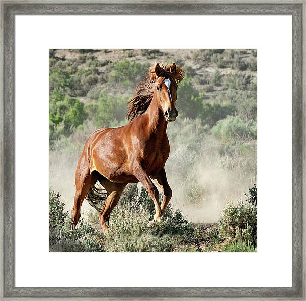 Magnificent Mustang Wildness Framed Print