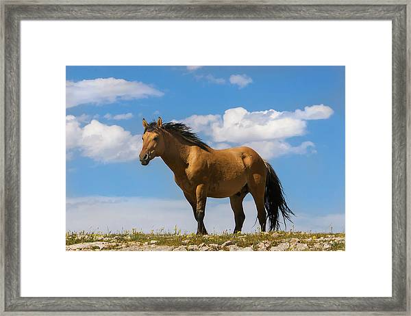 Magnificent Wild Horse Framed Print