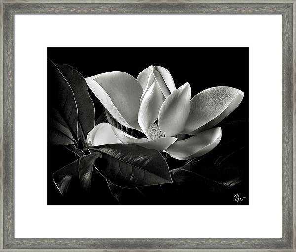 Magnolia In Black And White Framed Print