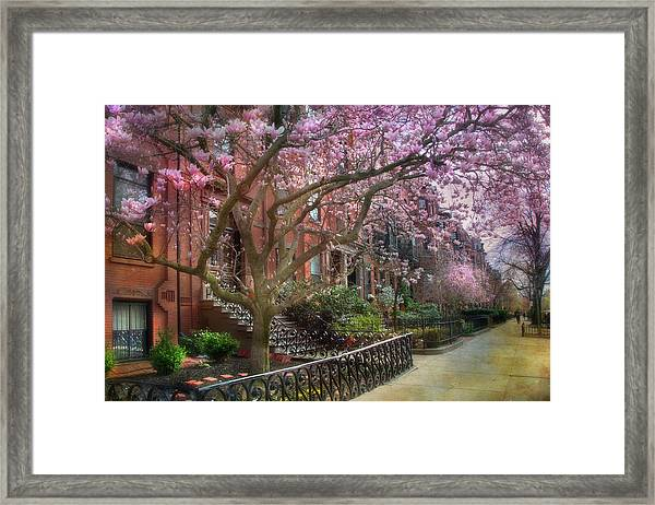 Magnolia Trees In Spring - Back Bay Boston Framed Print