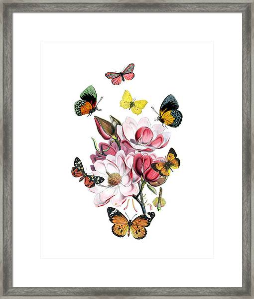 Magnolia With Butterflies Framed Print