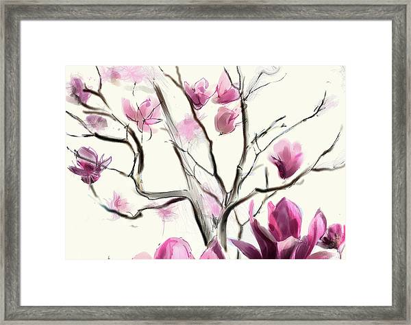Magnolias In Bloom Framed Print