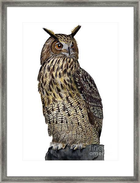 Majestic Eurasian Northern Eagle Owl Bubo Bubo - Hibou Grand-duc - Buho Real - Nationalpark Eifel Framed Print