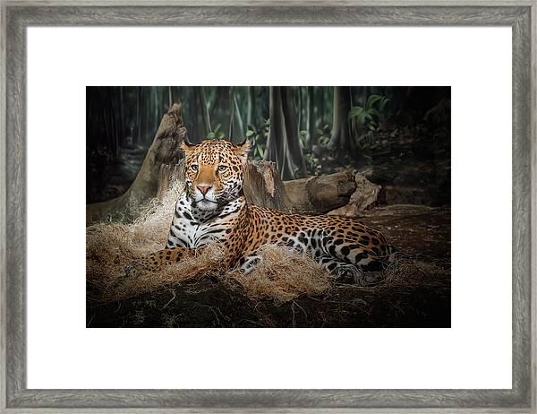 Majestic Leopard Framed Print