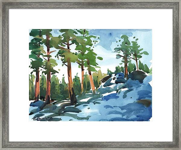 Majestic Pines In The Snow Framed Print