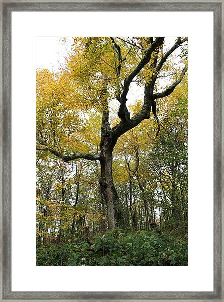 Majestic Tree Framed Print