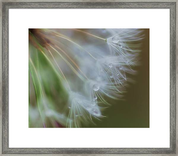 Framed Print featuring the photograph Make A Wish by Beth Sawickie