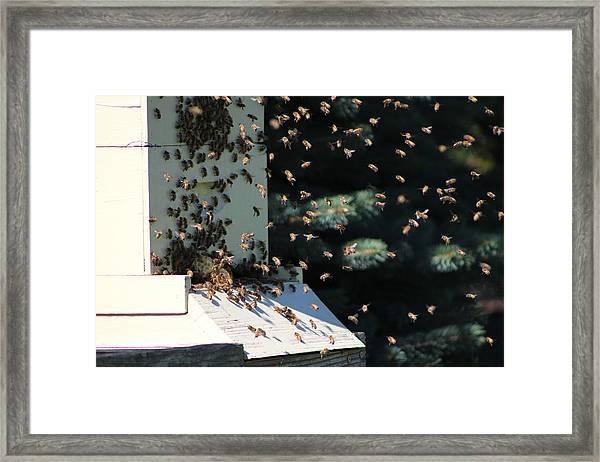 Making Honey - Landscape Framed Print