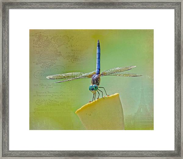 Male Blue Dasher Dragonfly Framed Print