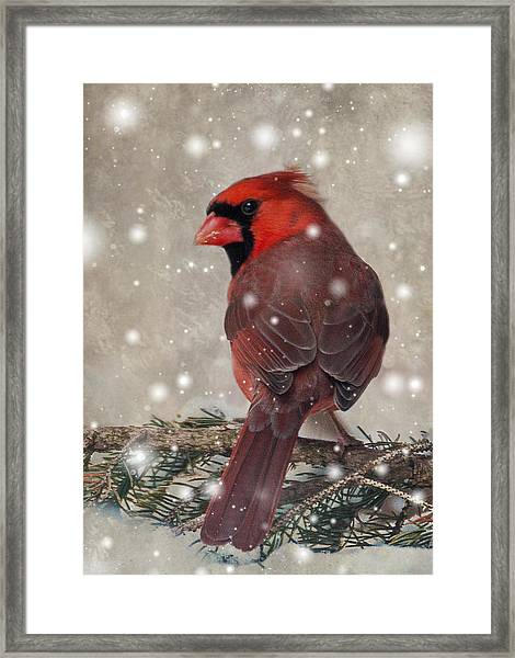 Framed Print featuring the photograph Male Cardinal In Snow #1 by Patti Deters