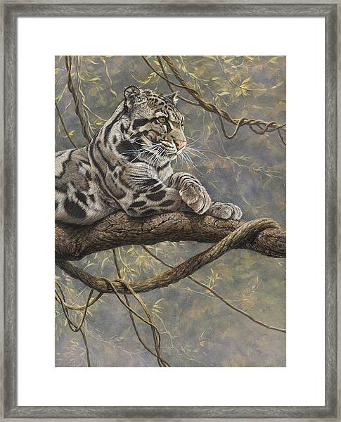 Male Clouded Leopard Framed Print